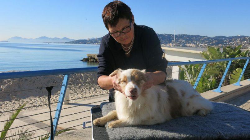 massage du chien