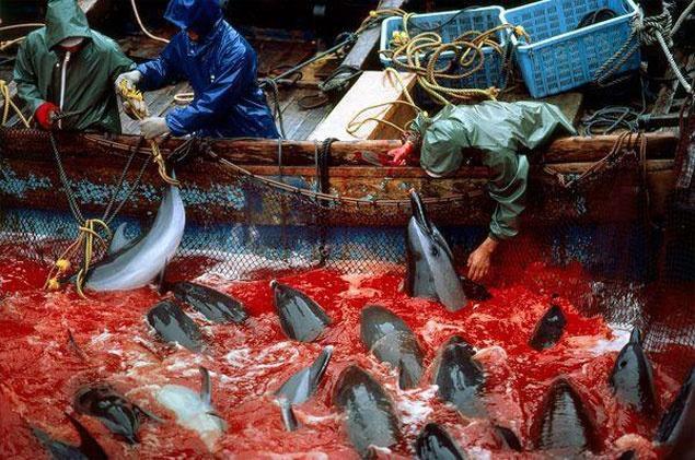 massacre des dauphins