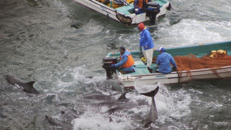 pêche aux dauphins baie taijin